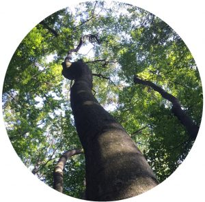 Shinrinyoga – Waldbaden