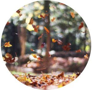 ShinrinYoga Blätter