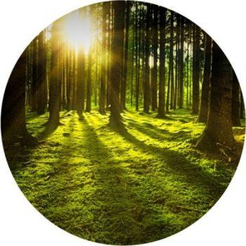 Waldbaden ShinrinYoga, weil starke Wurzeln unsere Flügel öffnen.
